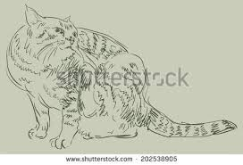 cat drawing simple vector sketch stock vector 202538881 shutterstock