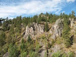 Pin Cushion Tree Hikingaddiction Ca Trails Pincushion Mountain