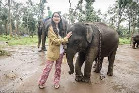 Blind Men And The Elephant Story For Children Mail On Sunday U0027s Liz Jones Reveals The Terrible Plight Of Indian