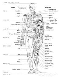 Anatomy Of The Human Skeleton Body Anatomy Muscle Names Woman Body Main Part Name With Picture
