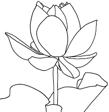 free printable lotus coloring pages for kids flowers and leaves