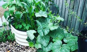 soil recipe for raised garden beds love of dirt