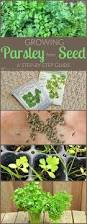 the 334 best images about growing from seeds on pinterest garden