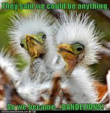 Meme Bird - so we became dandelions funny bird meme
