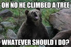 Sarcastic Meme - sarcastic bear know your meme