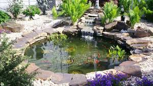 give best look to your waterfall design by adding fish to pond