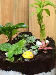 cookie jar terrarium big only for bangalore delivery