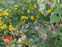 chicago native plants gardening with native plants my gardener says u2026