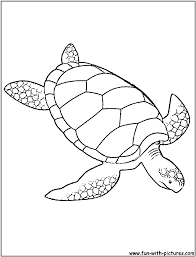 sea turtle coloring coloring design 8649 unknown