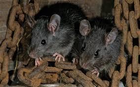 invasive species on emaze