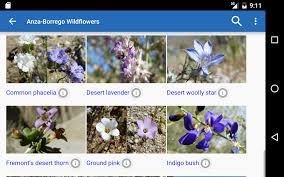 anza borrego wildflowers android apps on google play