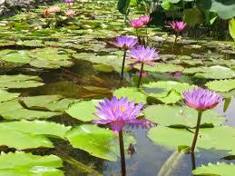 zilker botanical garden a little zen in austin texas u2022 solo