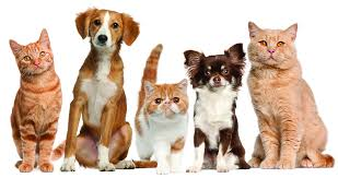 free pets desktop wallpapers dogs stock photo windows amazing