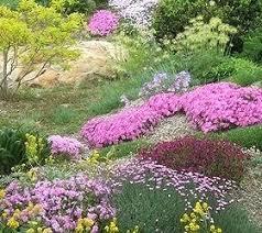 Best Plants For Rock Gardens Plants For A Rock Garden Best Rock Garden Plants Ideas On Rock