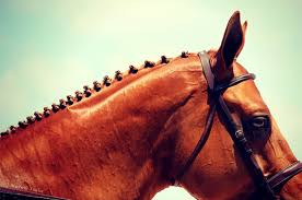hairstyles for horses braiding 101 learn the different types of horse braids noble life