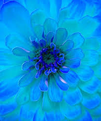 turquoise flowers pictures of turquoise flowers 21 best turquoise aqua flowers