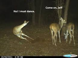 Oh Deer Meme - oh deer 68510778 added by mrvolbeat at fucking rick