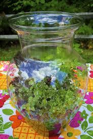 217 best terrarium images on pinterest indoor plants succulent how to make a terrarium in 10 easy steps