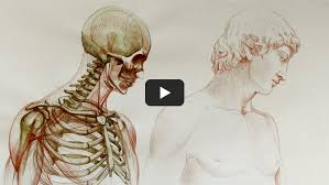 free anatomy lessons for artists anatomy master class