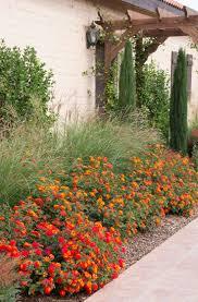 best low maintenance landscaping ideas only on pinterest plants