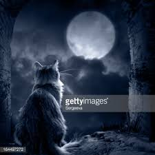 mariam s 2015 16 poetry writing cat in moonlight by