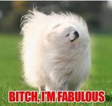 Bitch Im Fabulous Meme - bitch i m fabulous know your meme