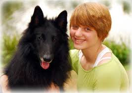 belgian sheepdog oregon about us u2013 verseau belgian sheepdogs