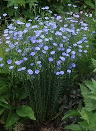 Plant Flower Garden - 21 best front garden images on pinterest flowers gardens and