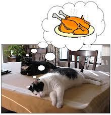 thanksgiving cat blogging jones
