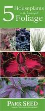being nature indoors with these easy houseplants use code pin10