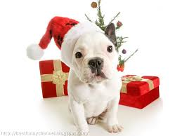 cute and funny pictures animals 47 christmas dogs