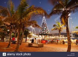 christmas tree overlooking beach playa de las canteras las