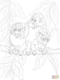 kuhl u0027s night monkey coloring page free printable coloring pages