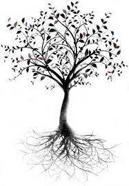 image result for tree with roots pretty