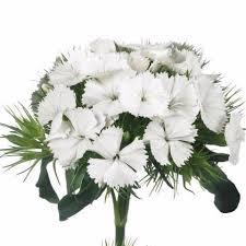 wholesale flowers miami buy beanthus wholesale flowers and supplies miami flower market