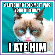 Grumpy Cat Birthday Meme - happy birthday memes with funny cats dogs and cute animals meme