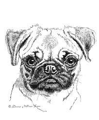 pencil drawings of pugs nikkiburr dans birthday pug by