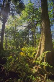 Tropical Dry Forest Animals And Plants - tropical rain forest biome