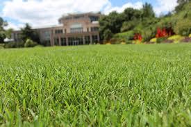 Bermuda Botanical Gardens Tiftuf Bermuda Grass Thrives At Atlanta Botanical Garden