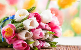cheap flowers cheap flowers directory the gift for your loved one