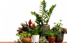 houseplants gulley greenhouse u0026 garden center