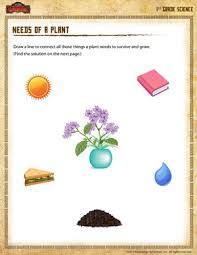 needs of a plant u2013 1st grade science worksheet of dragons