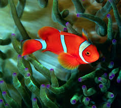 beautiful fish wallpapers hd pictures u2013 one hd wallpaper pictures