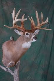 Deer Pedestal All American Taxidermy Taxidermy Gallery Taxidermy Studio In