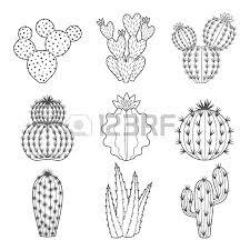 vector set of contour cactus and succulent plants decorative