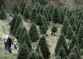 Cutting Christmas Tree - bay area getaways cutting down your own christmas tree u2013 the
