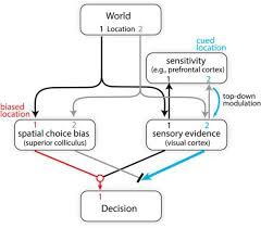 does the superior colliculus control perceptual sensitivity or