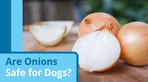 are onions for dogs are onions and garlic bad for dogs petmd