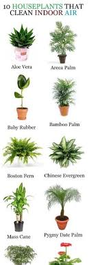 good inside plants 15 beautiful house plants that can actually purify your home