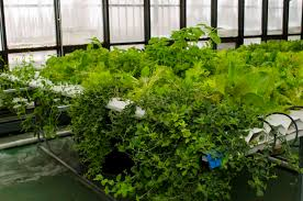 Indoor Garden Supplies - urban farming is booming but what does it really yield u2013 yardfarmers